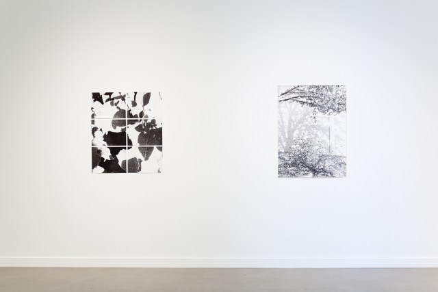 Jochen Lempert, installation view, Rochester Art Center. Left: Untitled (On photosynthesis), 2009. 6 b&w photographs, silver gelatin prints. 11 ½ x 15 ½ inches each. Right: Zur Photosynthese (On photosynthesis), 2009. B&w photograph, silver gelatin print. 40 ½ x 30 inches.