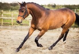 Horse_photographer_Derbyshire-9