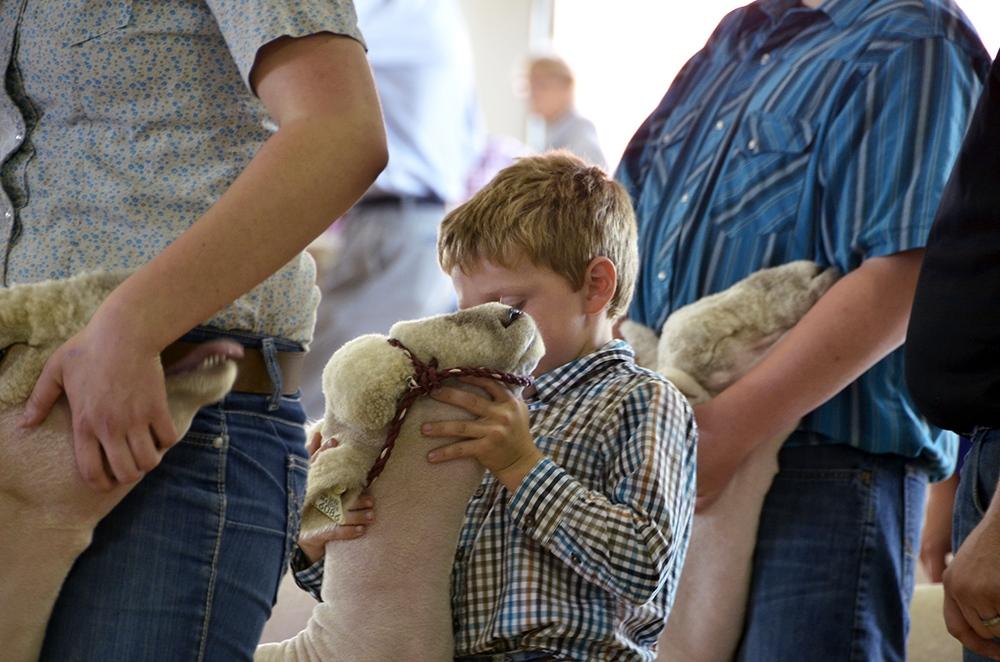 kid_sheep