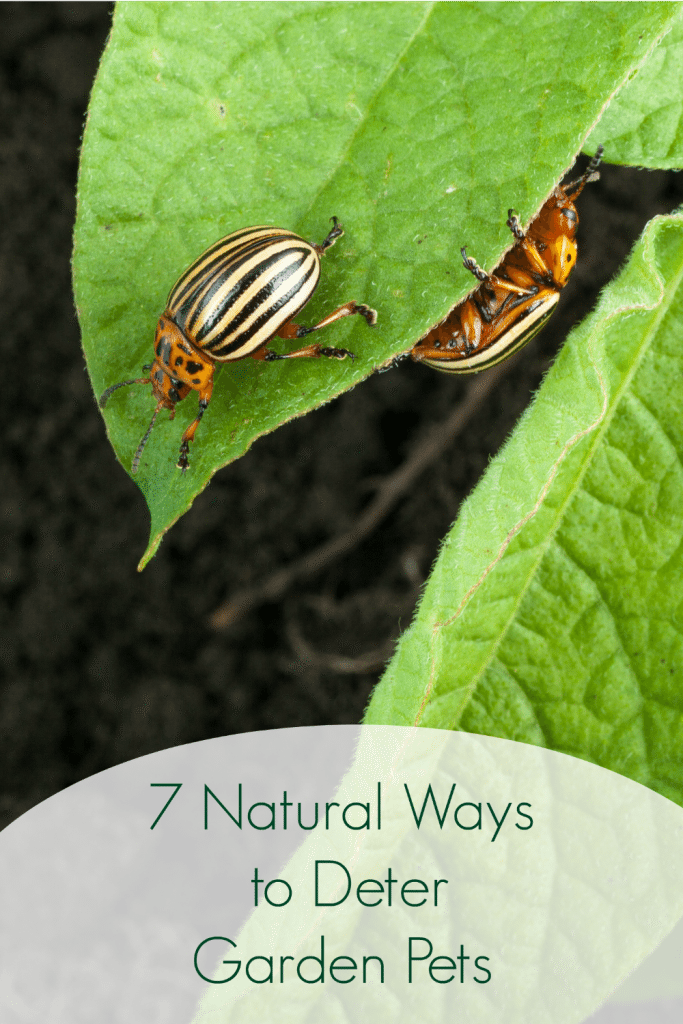 Vegetable Garden Tips like these 7 Natural Vegetable Garden Pest Deterrents will help you to keep your garden organic this year with ease!