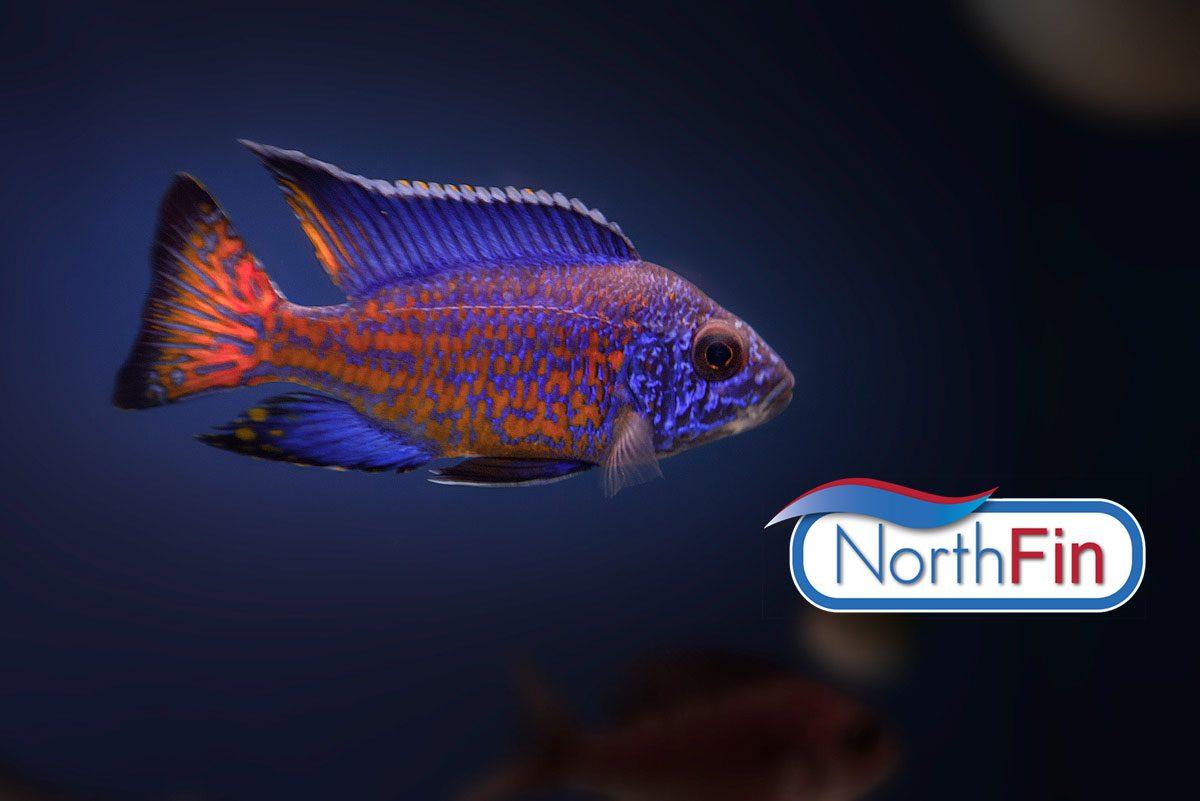 Northfin-Slider