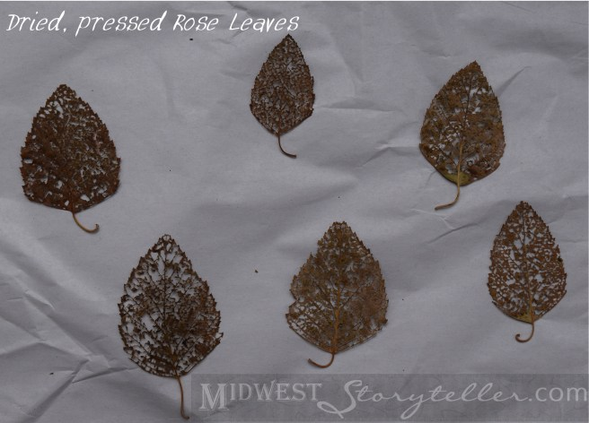 Dried Rose Leaves www.midweststoryteller.com