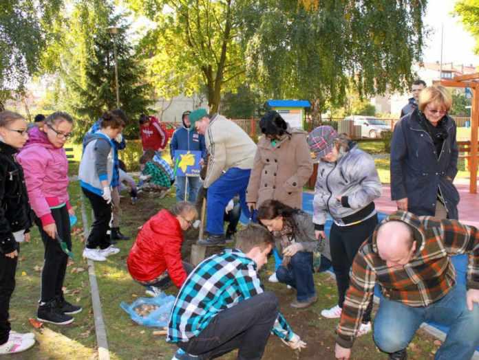 2013-10-05-glogowscu-czniowie-sadza-zonkile@Glogow-(fot.D.Jeczmionka)-01-