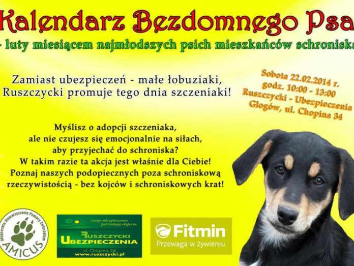 2014-02-20 - szczeniaki-z-glogowskieg-schroniska-szukaja-domu@Glogow--Plenerowa akcja adopcyjna szczeniąt