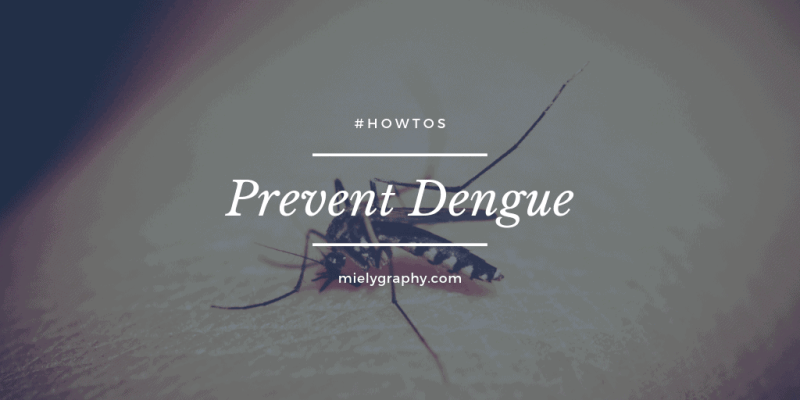 How to prevent dengue virus in your home