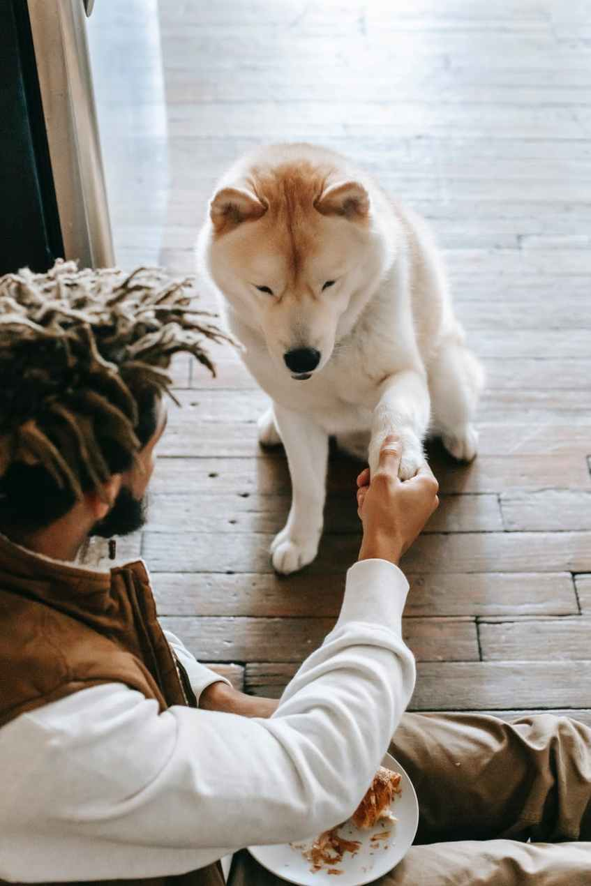 anonymous ethnic male sitting on floor and holding paw of curious pet
