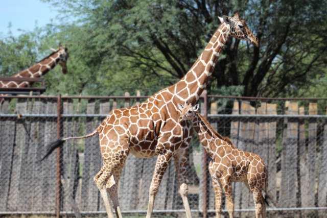 El Zoo de León tiene nueva integrante
