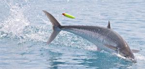 pêche en surface