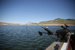 pêche à la traîne vanne bateau vitesse poisson
