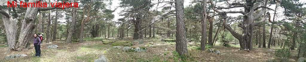 Sendero de los Abuelos del Bosque, Soria