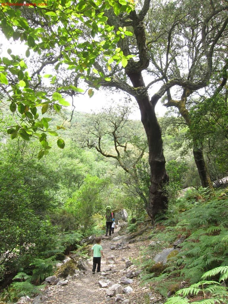 Sendero al Canchal de las Cabras Pintadas