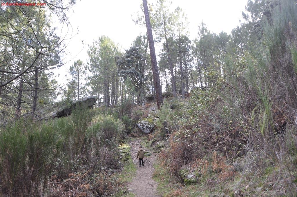 Sendero de pinos albares y rocas graníticas