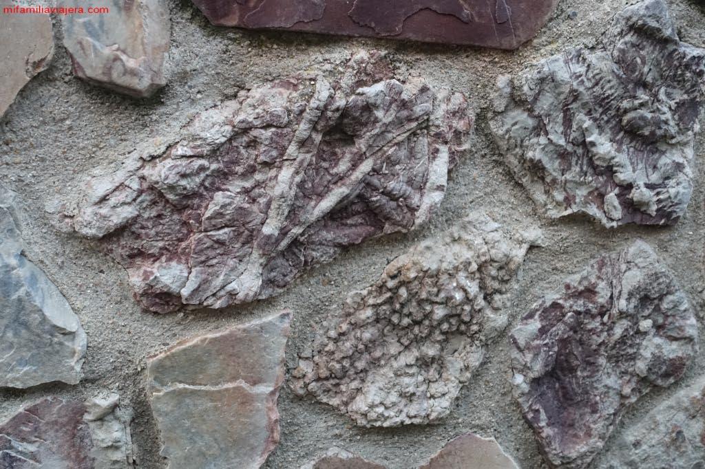 Icnofósiles