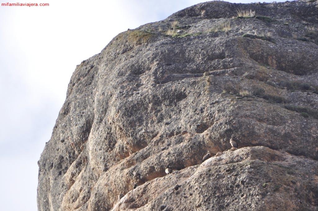 Buitres en las paredes verticales