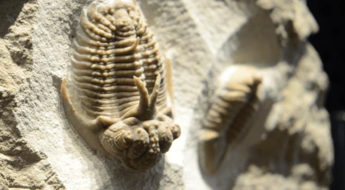 『化石の世界』をもっと知ろう!そして平成30年度の特別展では…