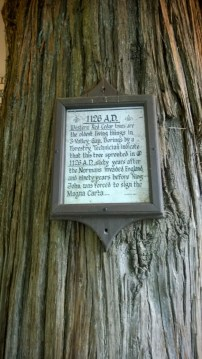 100- year old tree