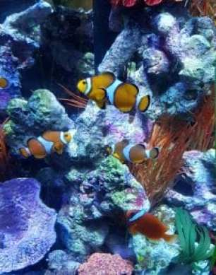 Sea Life Aquarium Cbeebies Land