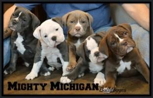 Puppies at 8 Weeks