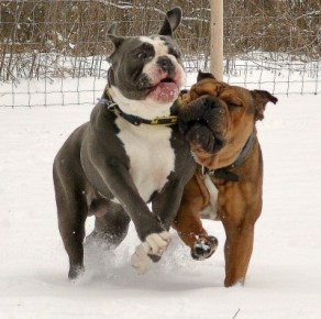 Spartacus & Vader