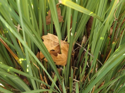leavestallgrass