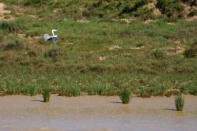 Donaña Cruise: Grey Heron