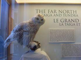 Pour mémoire, Montréal N'EST PAS le Grand Nord (sauf à penser que Bordeaux est au nord)