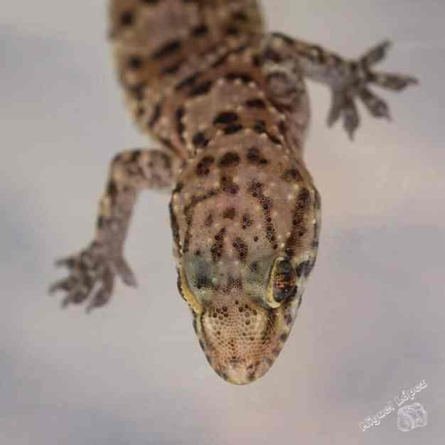 Curso-Reptiles-y-Anfibios-de-Andalucia-1