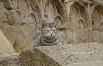 """Un chat """"gothique"""""""