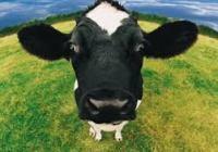 Medidas para el agro: EL PRESIDENTE VIVE EN UNA NUBE DE GASES