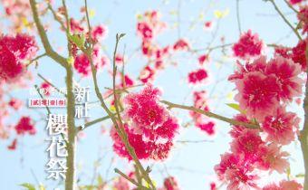 【新社櫻花季 】到山上賞櫻花吧!私房景點,不用人擠人的新社東興路櫻花林