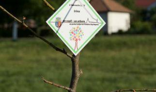 Învăț numele copiilor din Cluj