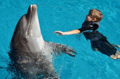 01-david-cu-delfin