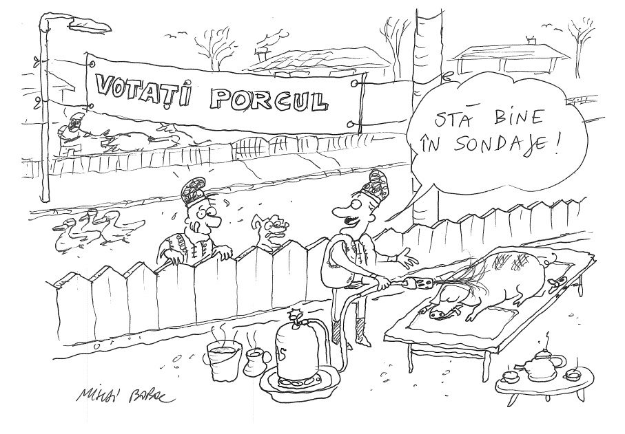 Votati porcul romanesc 1