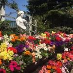 【話題のスポット】三春ハーブ花ガーデン|季節折々の花々を楽しむ癒し空間
