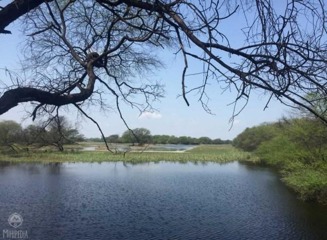 Keoladeo-Ghana-Bird-Sanctuary1
