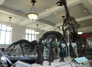Museum-Dino