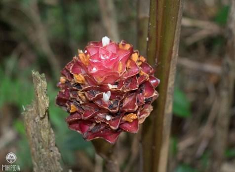 Flora7