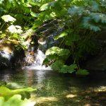 シャスタお勧めスポット ルートクリーク(Root Creek)