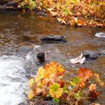 【シャスタ】美しい秋におすすめの場所は? 秋に水遊び?