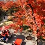 福岡の紅葉スポット!穴場と名所おすすめ5選!見頃とライトアップ情報!美味しいお土産も紹介します