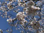 春ははじまり!新しい時代はもうすぐ!蘇り・再生のエネルギー