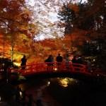 【京都の紅葉】穴場!ライトアップがおすすめ!行く価値あり!