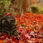 【京都の紅葉名所】圓光寺に行ってきました!もみじとお地蔵様はインスタ映え!おすすめランチ紹介
