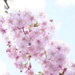 【週記】自分の中心に戻すには? 心穏やかに!癒され元気になる方法 2/22-2/28