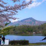【週記】京都の桜も終わりかけ~ STAY HOMEいかがお過ごしですか?