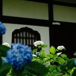 【週記】京都で紫陽花!ホタル?今思うこと「アドベンチャー」 2020/6/1-6/7