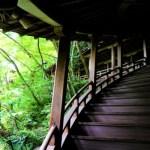 【6月京都観光おすすめ】新緑・あじさい・苔が美しいお寺8選!