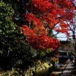 【癒しのパワースポット】哲学の道紅葉1日巡り!永観堂へ南禅寺へ