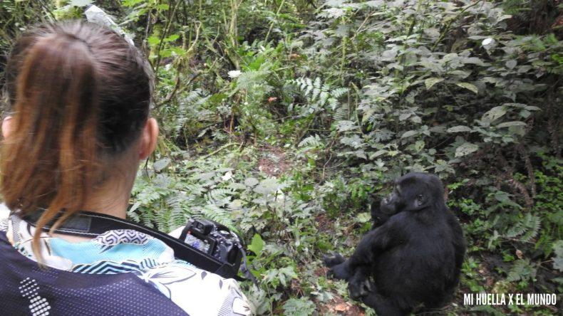 trekking gorilas (16)