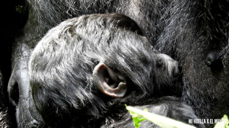 trekking gorilas (2)
